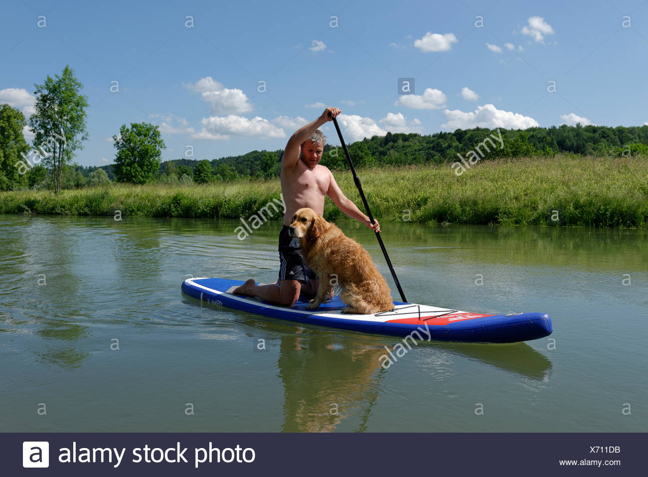 Dog Surfing Stock Photos Amp Dog Surfing Stock Images Alamy