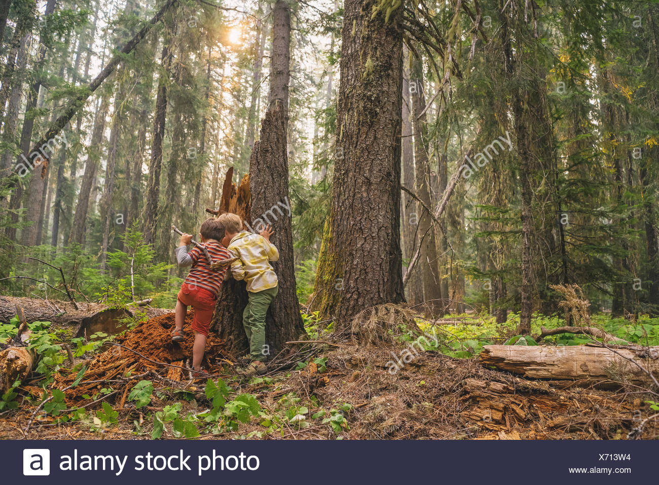 Two boys playing in the forest - Stock Image