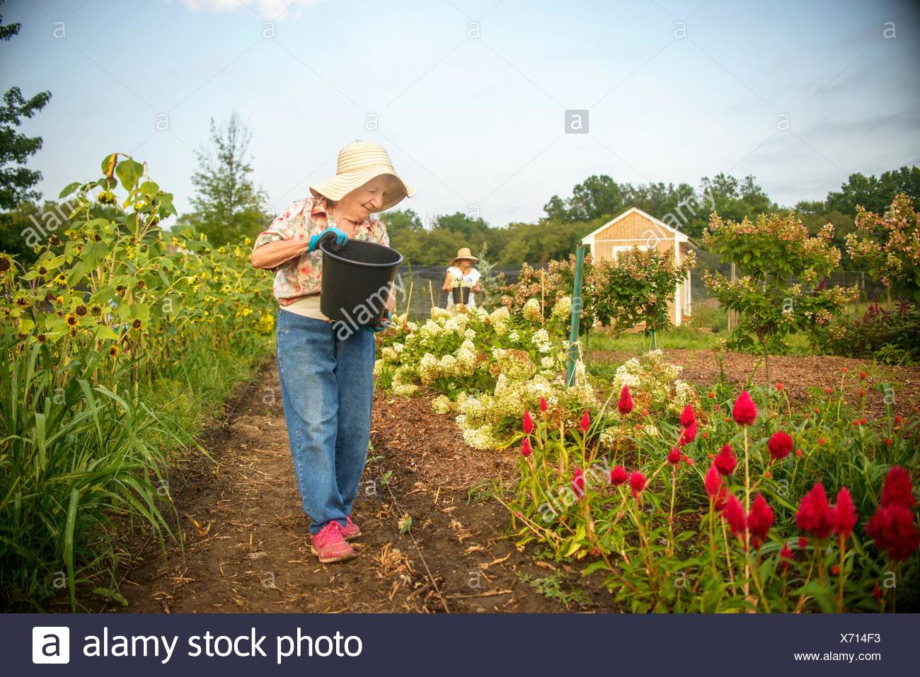 Senior woman watering flowers with bucket on farm Stock Photo