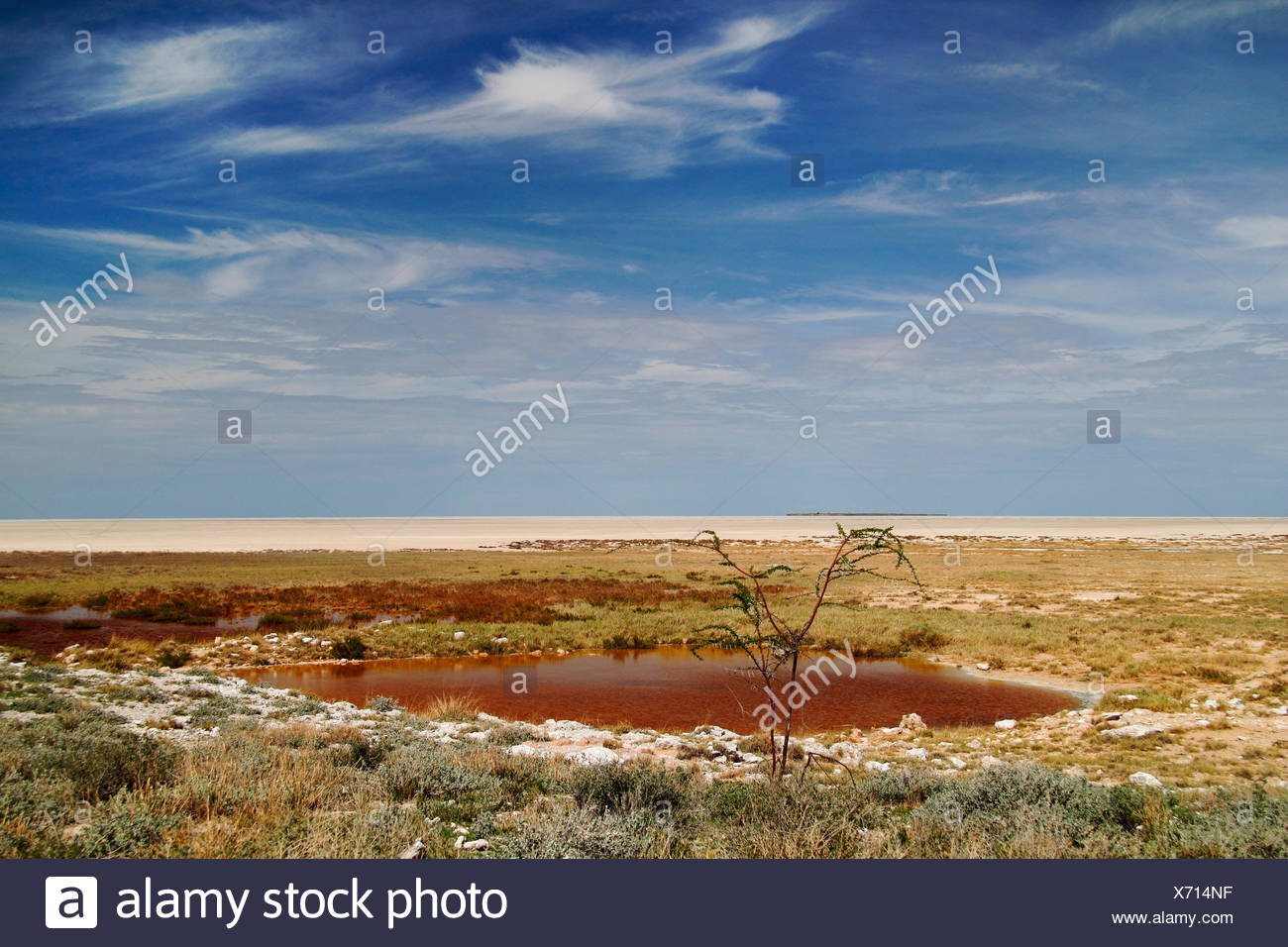 waterhole at the border of the salt pan, Namibia, Etosha National Park - Stock Image