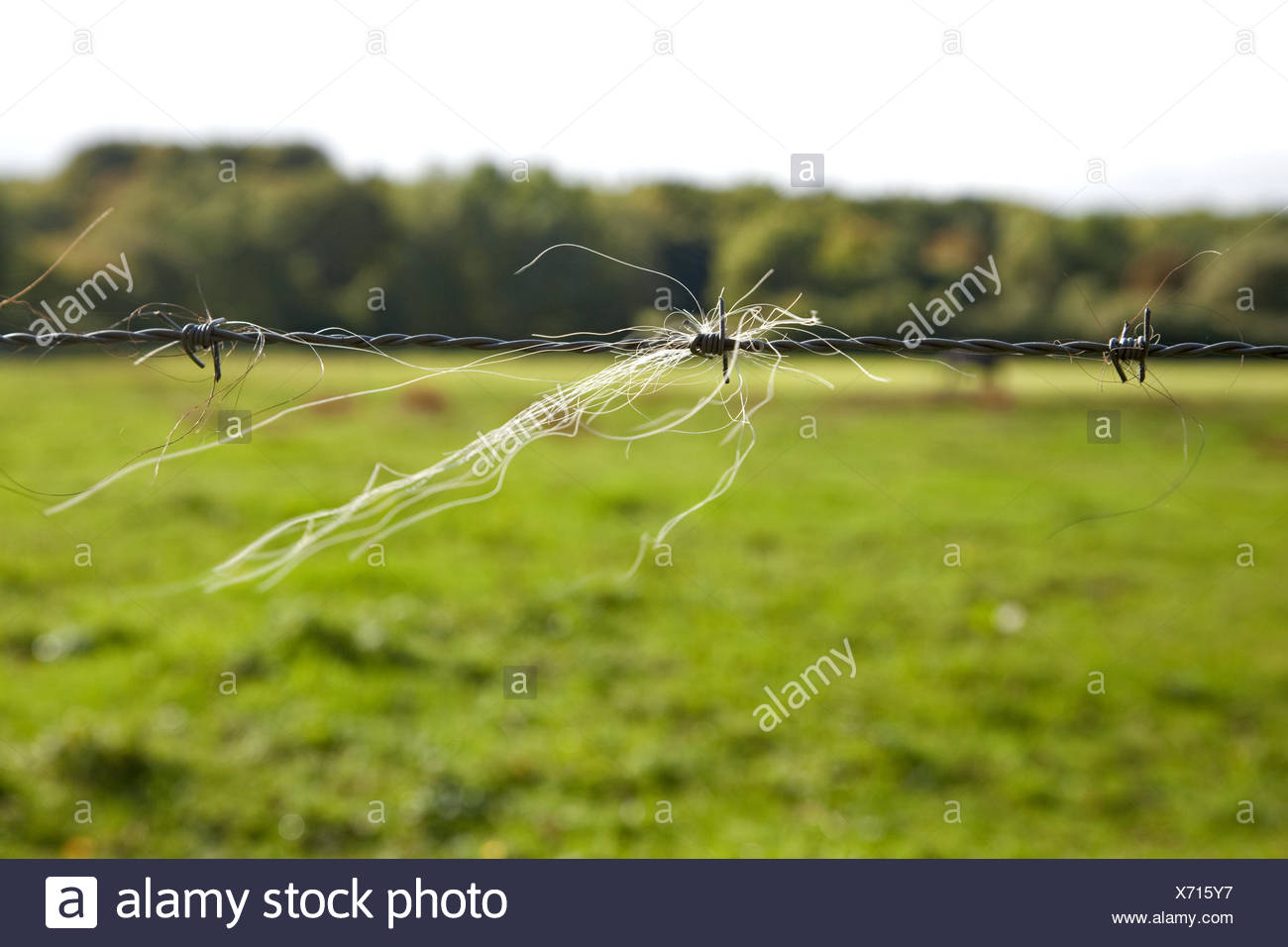 Barbed wire, horsehair, pasture, field, fence, meadow, rural ...