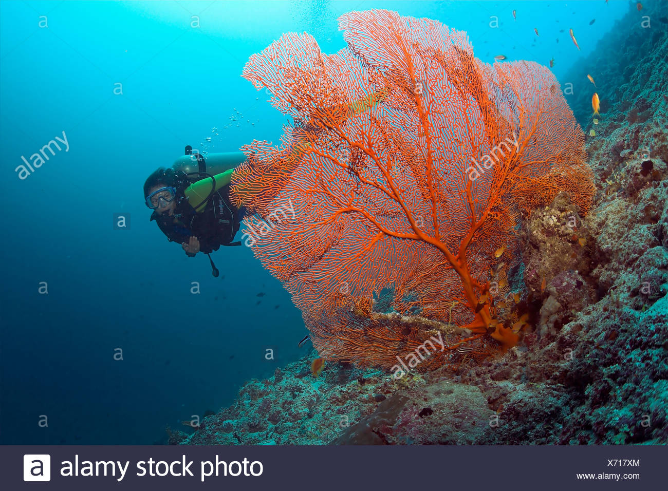 Diver behind a Gorgonia (Scleraxonia) - Stock Image