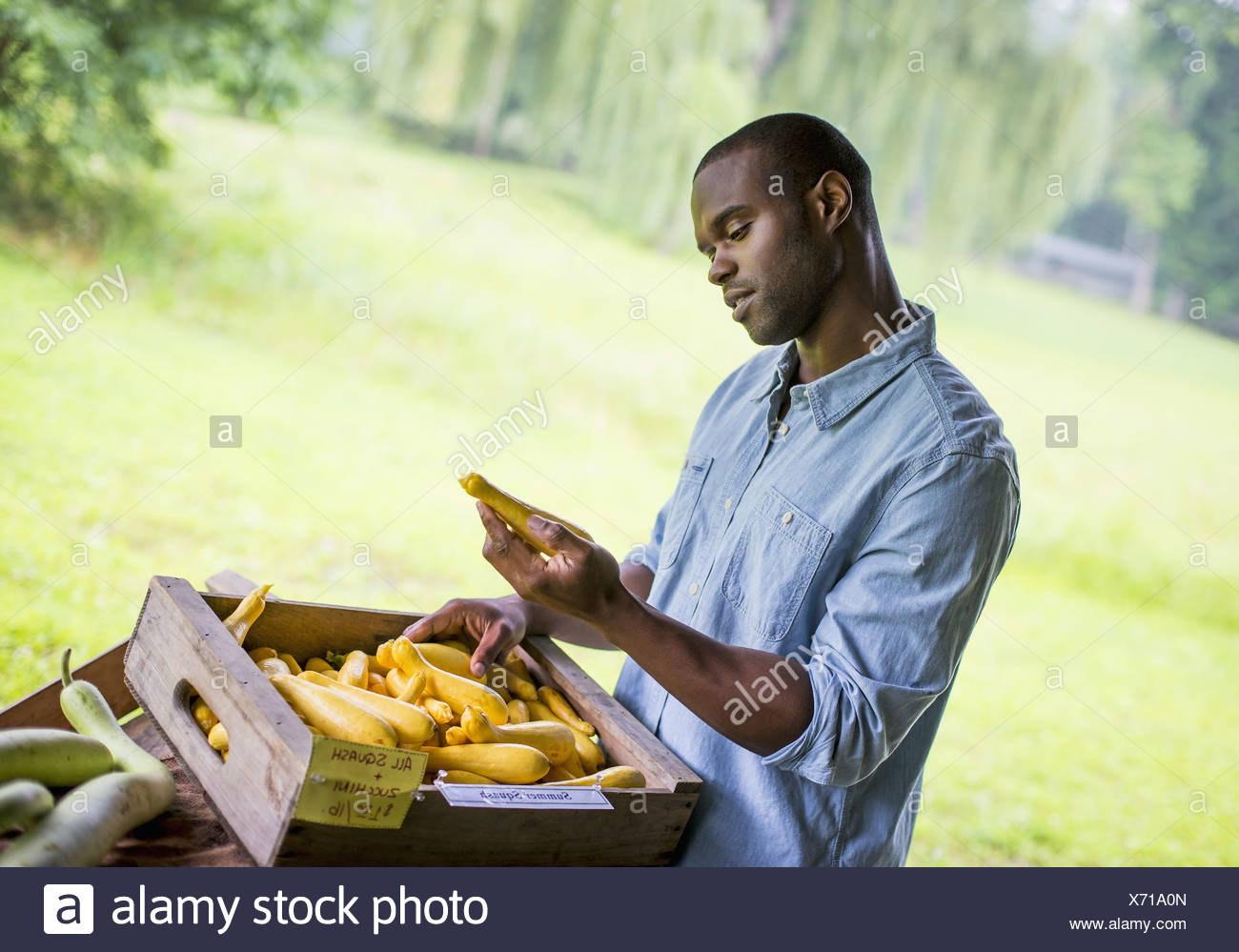 An organic fruit and vegetable farm. A man sorting vegetables. - Stock Image