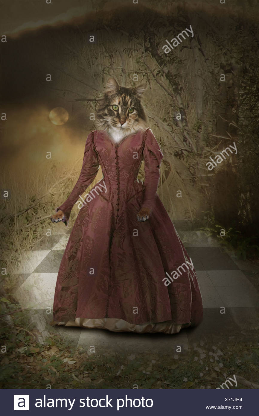 cat with human dress standing outside on a tiled floor and a moon shining down - Stock Image