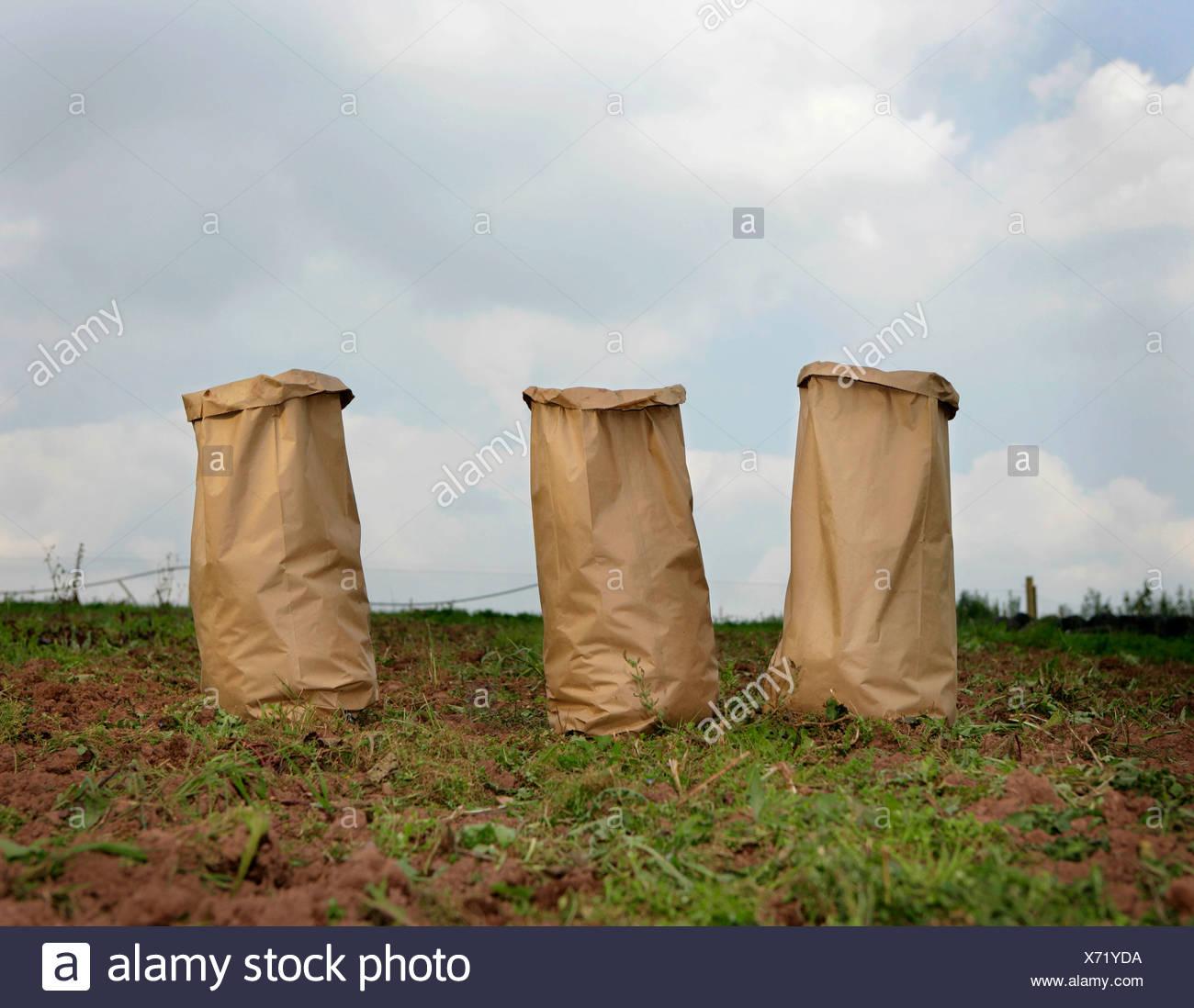 sacks in field - Stock Image