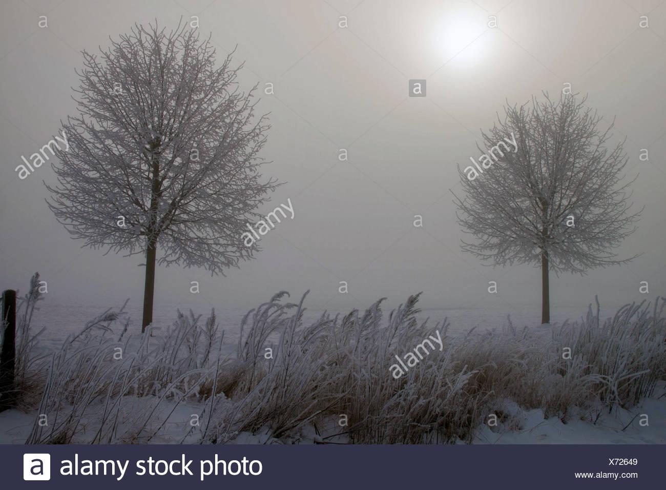 winter scenery with mist in the morning, Germany, Mecklenburg-Western Pomerania, Biestow, Rostock Stock Photo