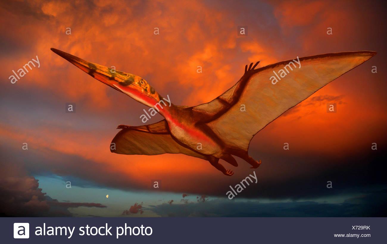 Pterodactylus (Pterodactylus), flying at sunset Stock Photo