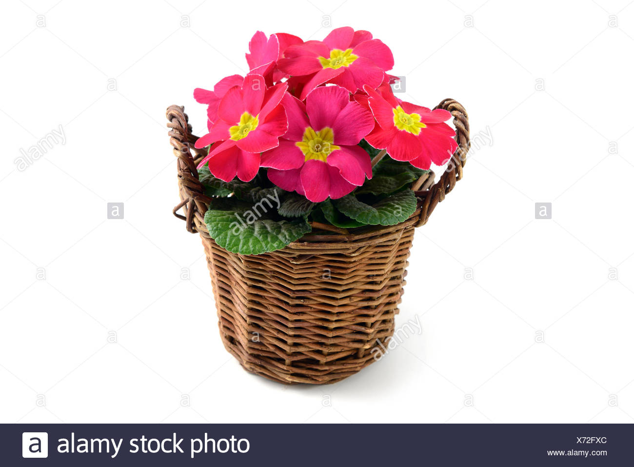Pink Flower Pot Against White Background Stock Photo 279724884 Alamy