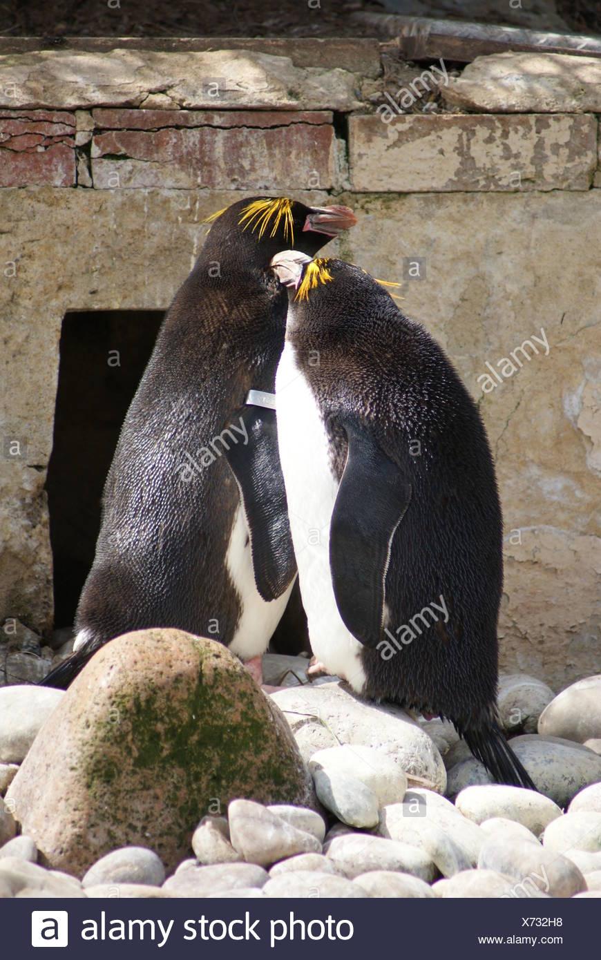 Blue Animal Bird Penguin Wildlife Emperor King