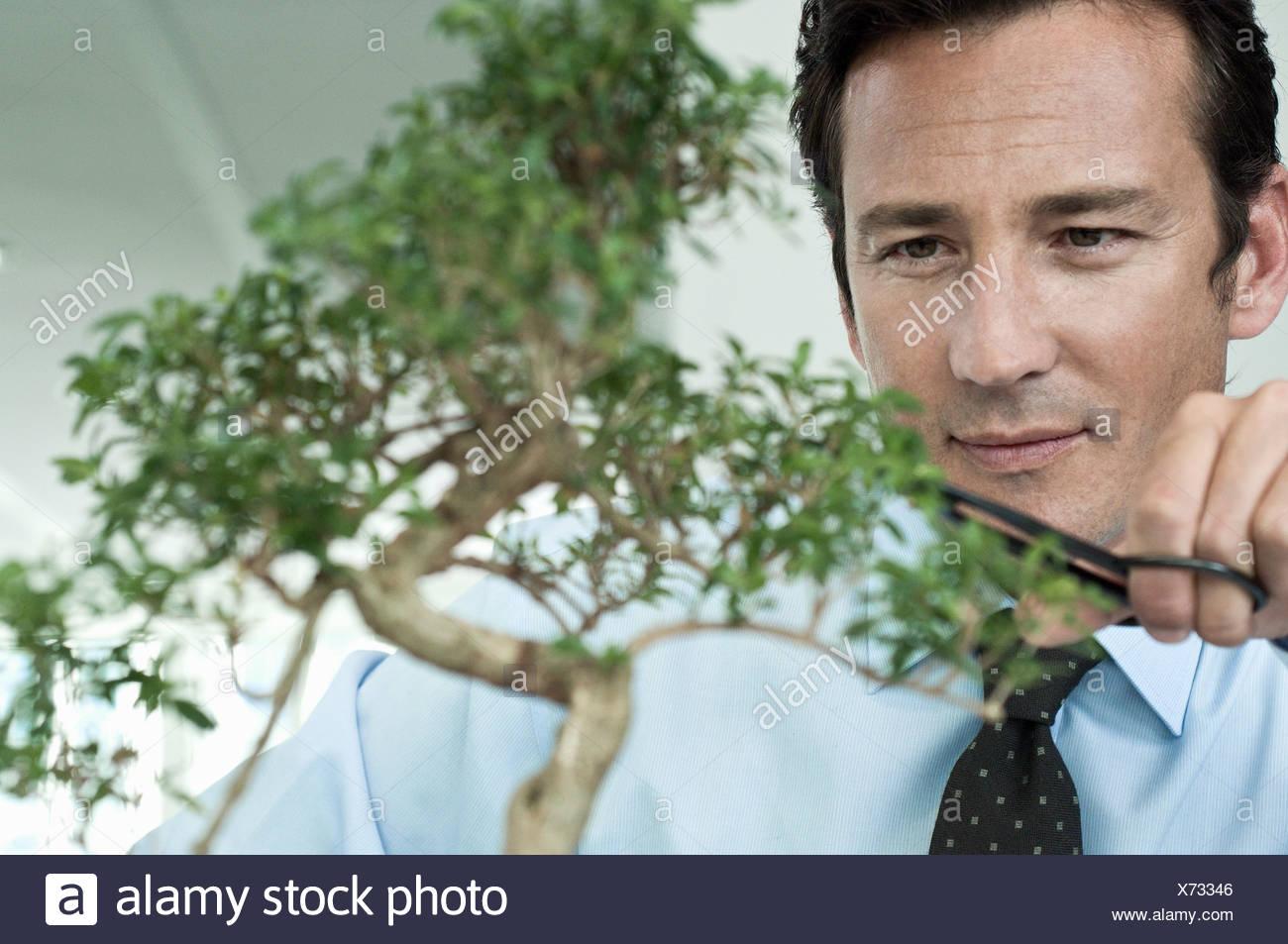 Businessman pruning bonsai tree - Stock Image