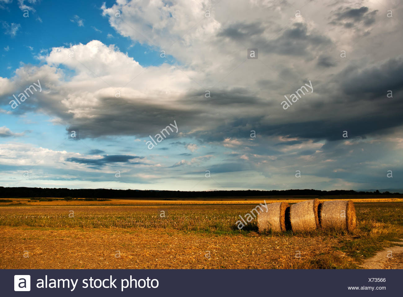 field, acre, cultivation, scenery, countryside, nature, harvest, profit, gain, Stock Photo