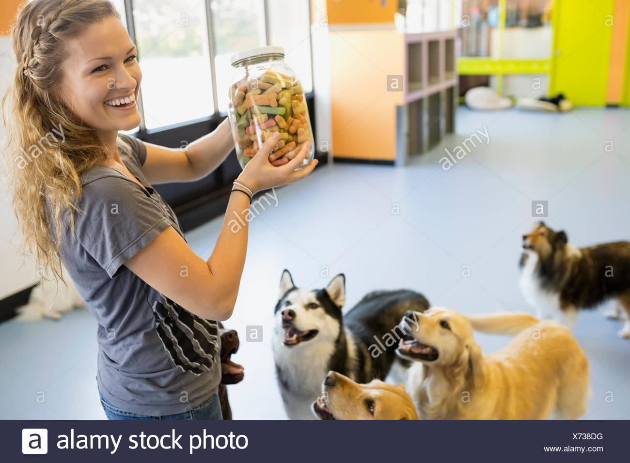 Dogs looking up at woman with biscuit jar - Stock Image