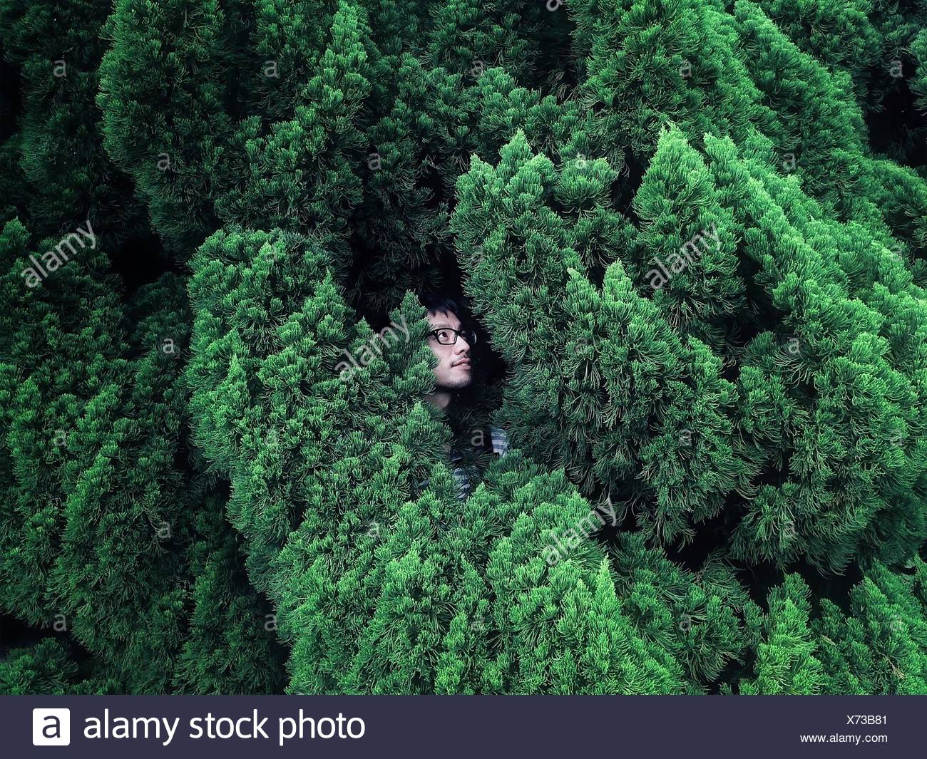 Young Man Hiding In Bush - Stock Image