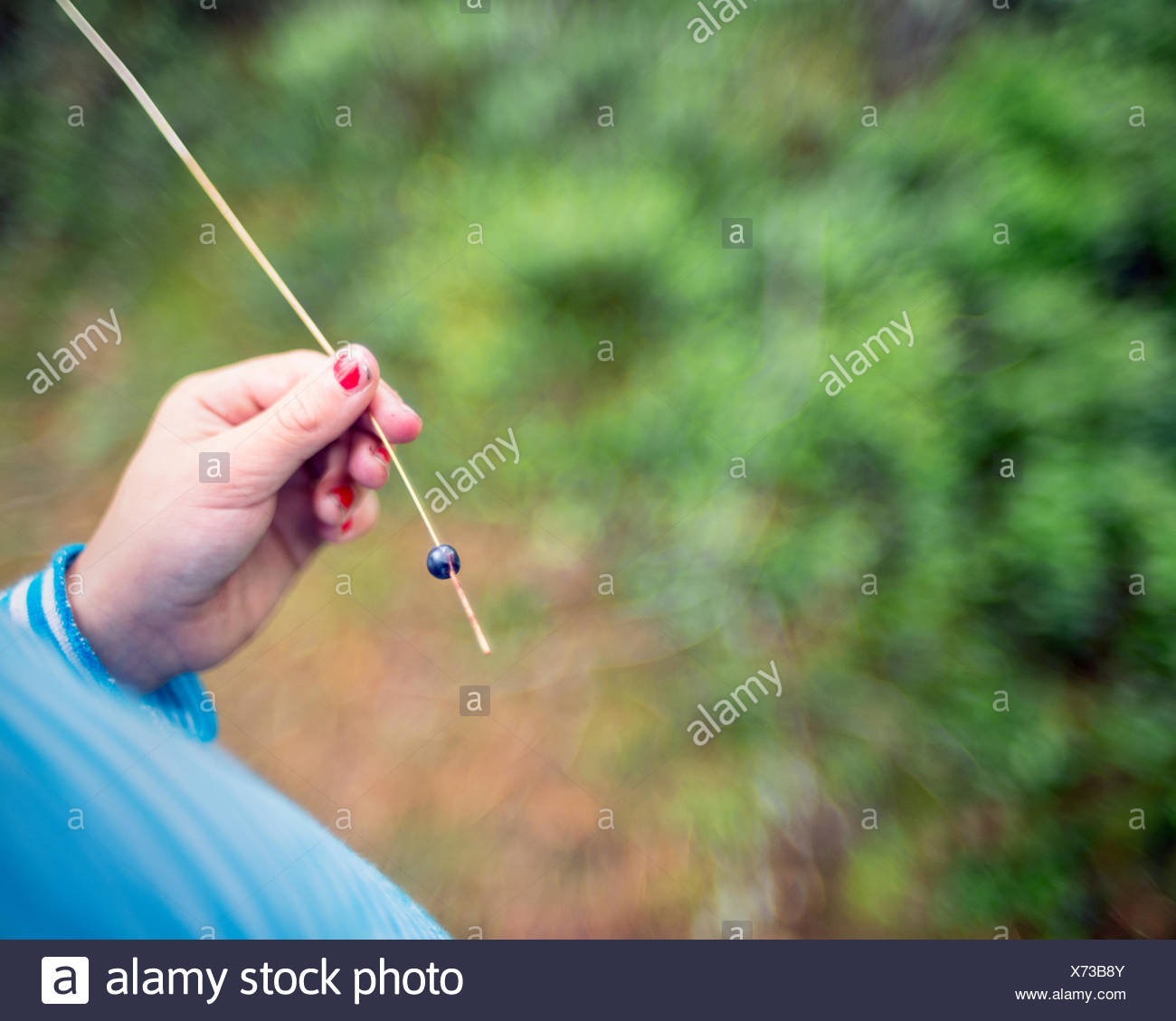 Girl holding blade of grass with blueberry - Stock Image