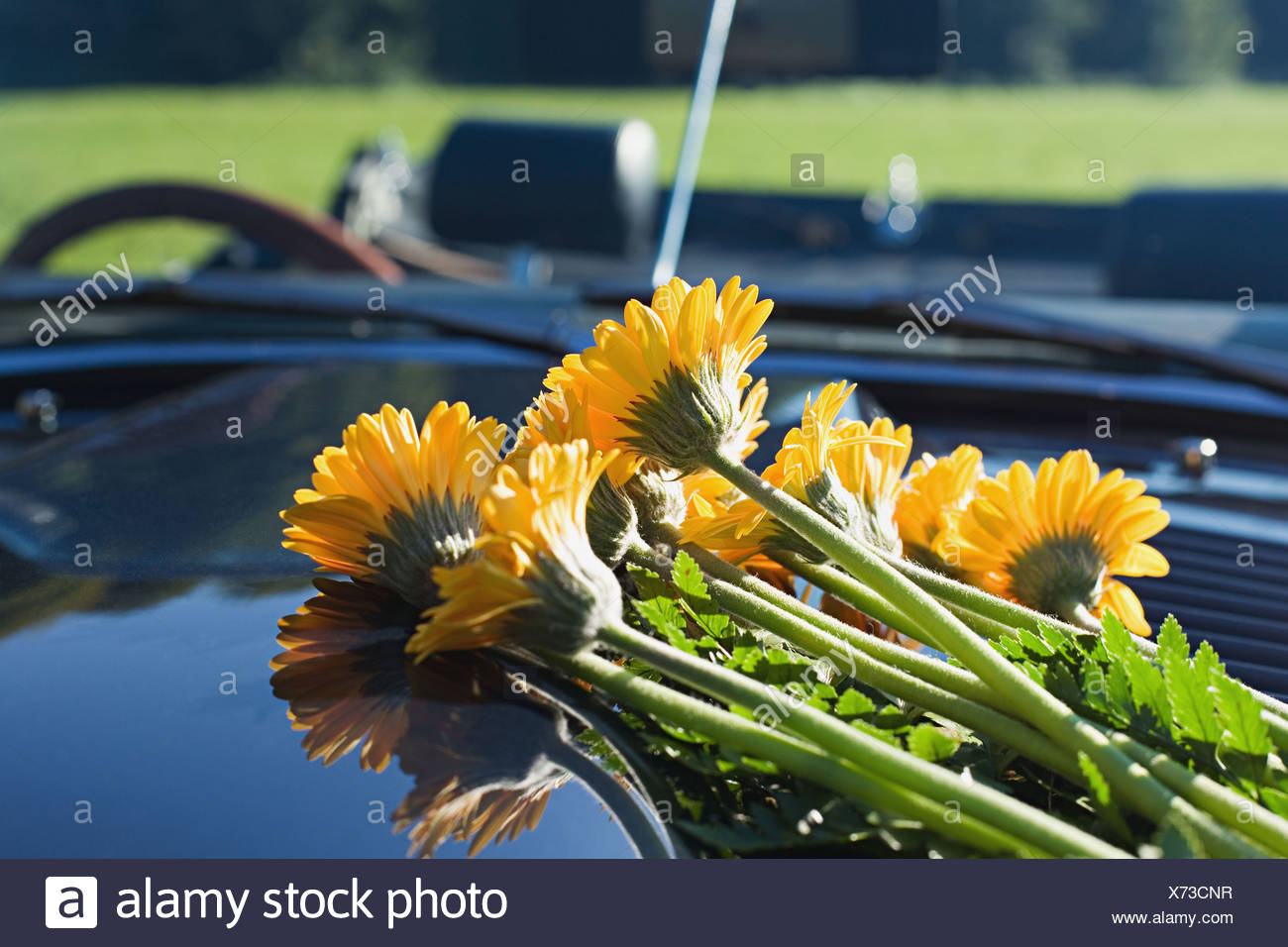 Flowers on a car hood - Stock Image
