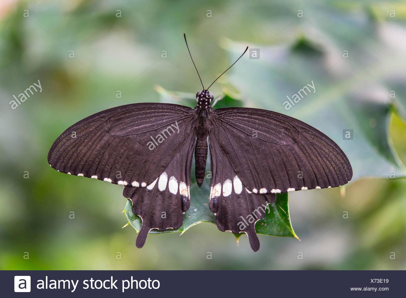 Asia Butterfly Garden Stock Photos Asia Butterfly Garden Stock