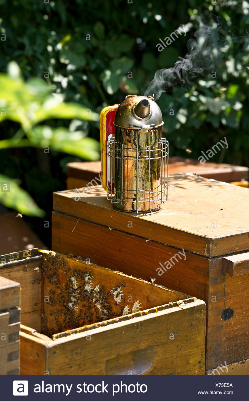 Wooden beehives with smoker, Freiburg im Breisgau, Black Forest, Baden-Wuerttemberg, Germany - Stock Image