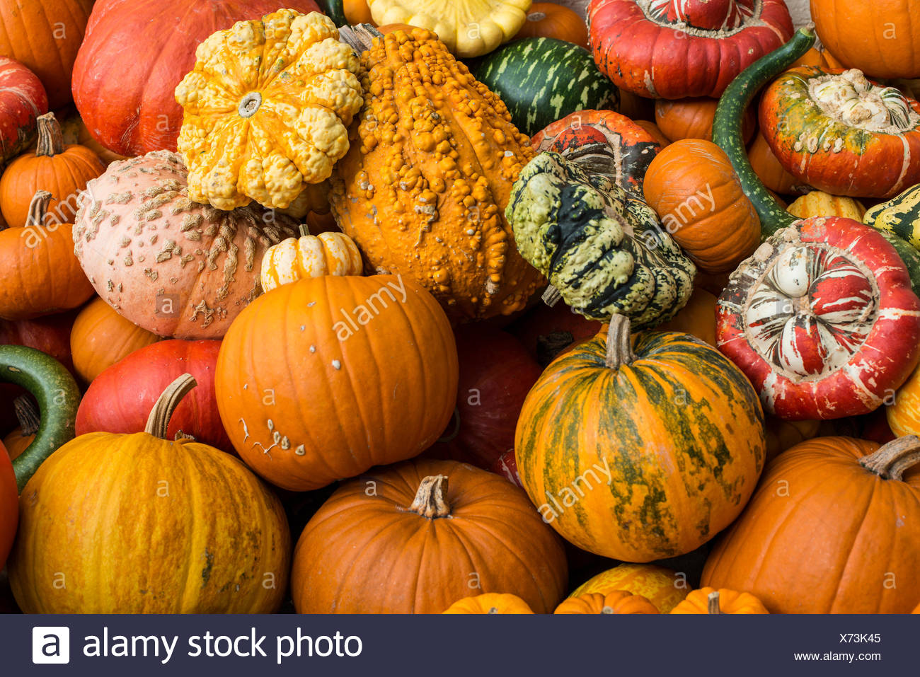 Different varieties of pumpkins, pumpkins, Baden-Württemberg, Germany - Stock Image