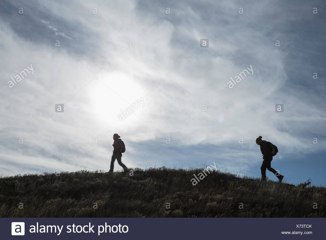 Biologists trek to locate a wolf den belonging to the Eight Mile Wolf Pack. Stock Photo