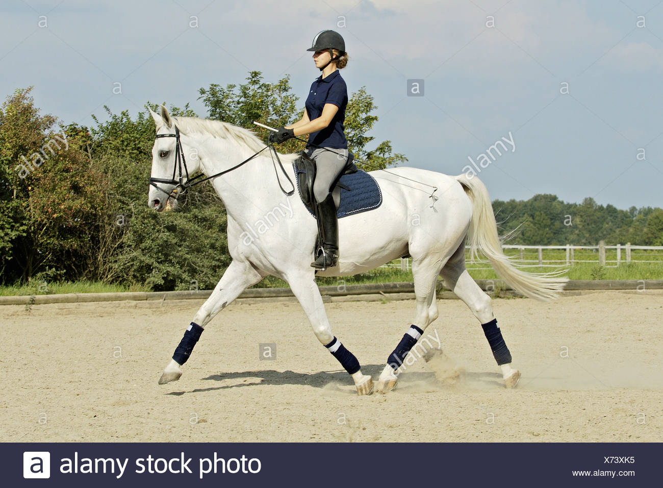 Young Dressage Rider On White Horse Stock Photo Alamy