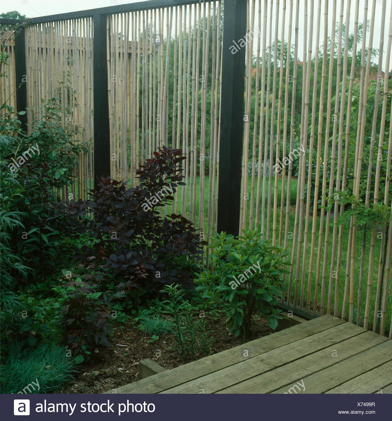 Picture of: Bamboo Fence Beside Shrubs In Garden Border Stock Photo Alamy