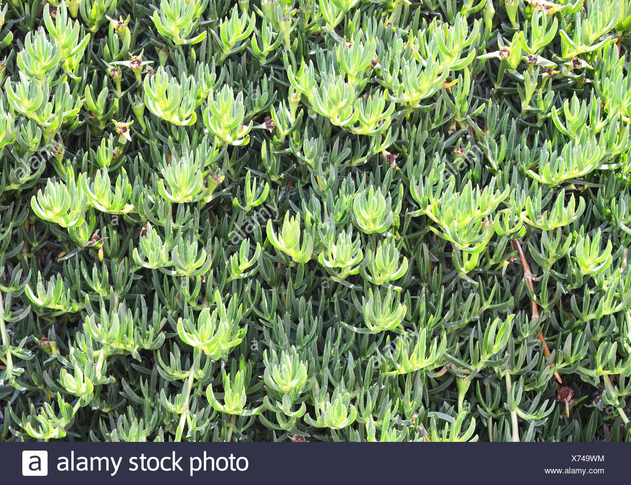 Mediterranian plants. - Stock Image