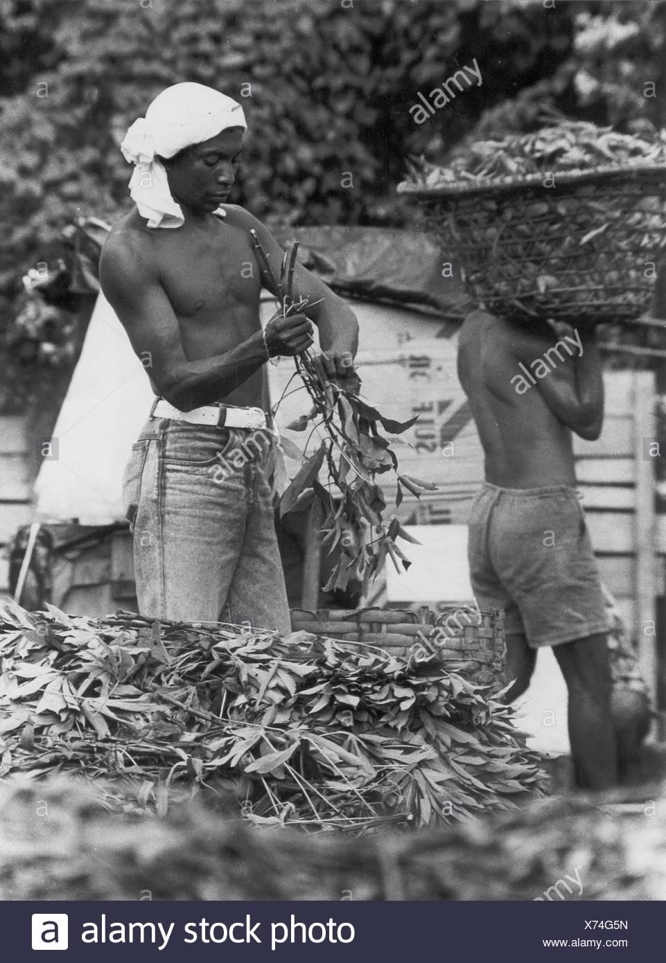 Workers, Belém, Pará, Brazil - Stock Image