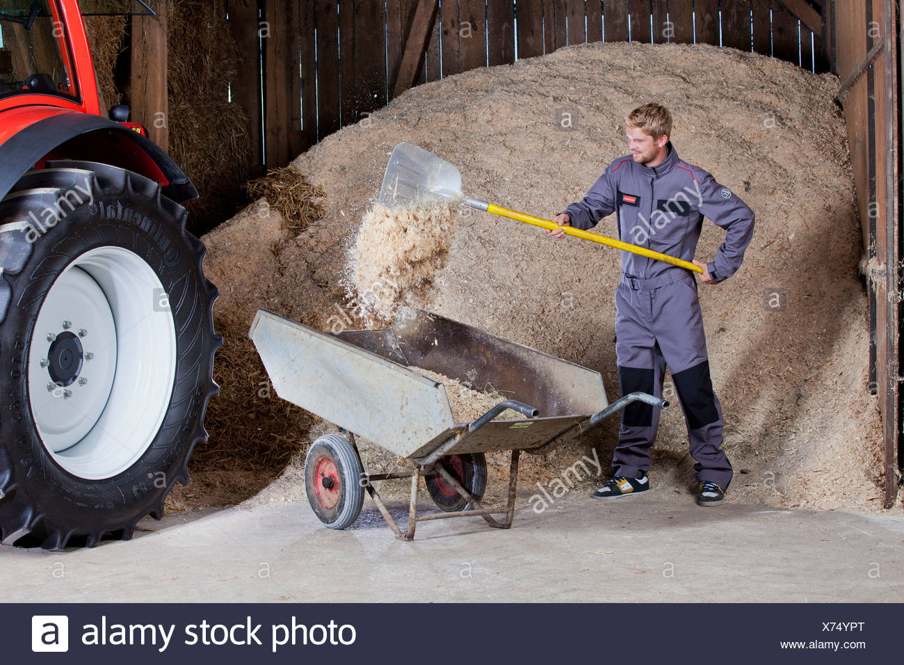 Young man shovelling sawdust into a wheelbarrow, Reith im Alpbachtal, Kufstein District, North Tirol, Tirol, Austria - Stock Image