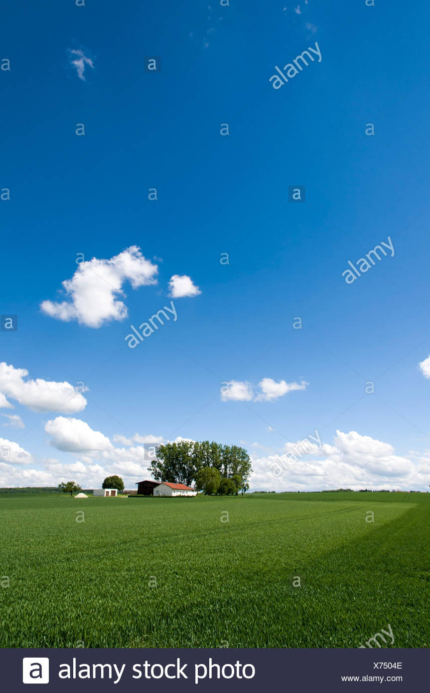 Isolated farmstead, farm in grain field in the spring, between Ingolstadt and Riedenburg, Bavaria, Germany - Stock Image