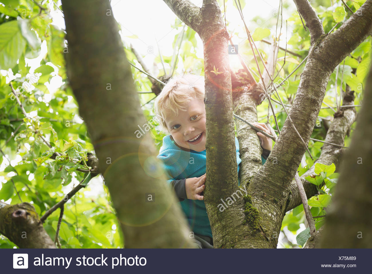 Young blonde boy in garden playing in cherry tree Stock Photo