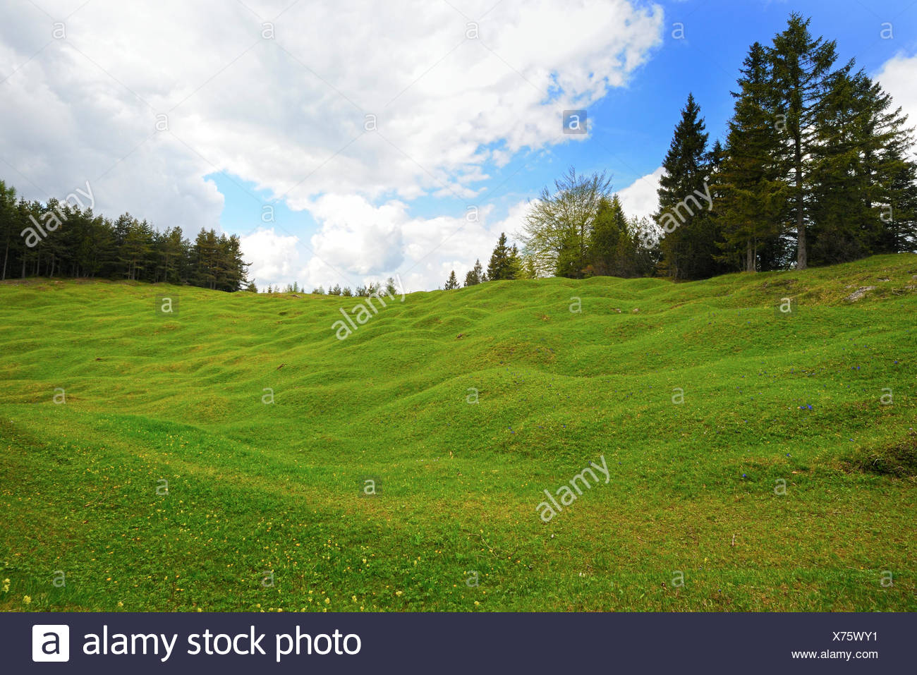 Hump meadows at Kranzberg, Karwendel Mountains, Mittenwald, Werdenfelser Land, Upper Bavaria, Bavaria - Stock Image