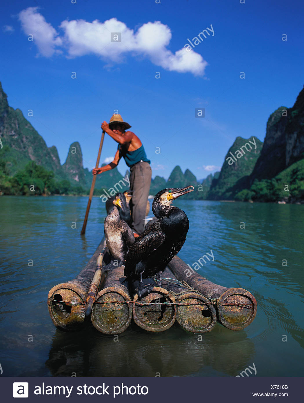 Chinese fishmen fishing with cormorant on River Li Guilin - Stock Image