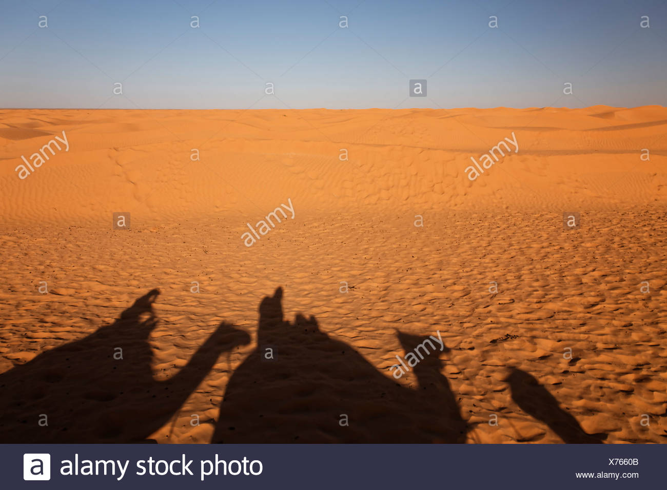 Africa, North Africa, Tunesia, Maghreb, Sahara near Ksar Ghilane, Shadows of a caravan with dromedaries and tourists on sand - Stock Image