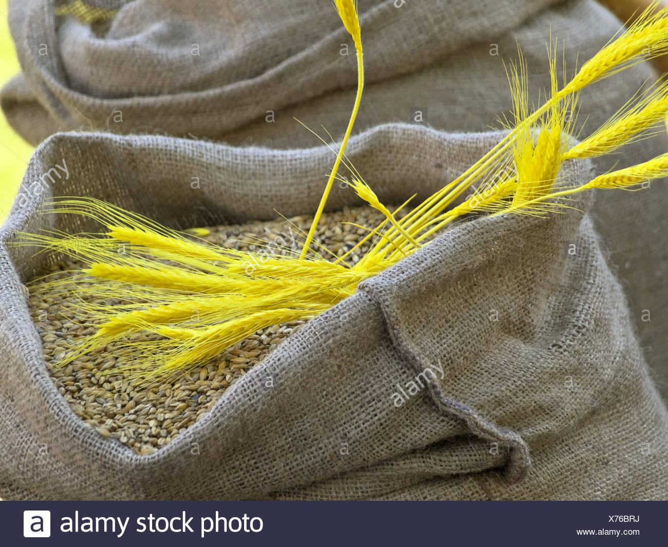 sacks of grain - Stock Image