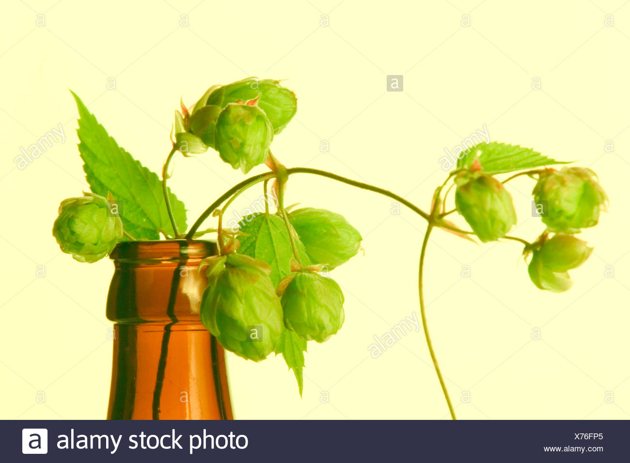 Hop in a beerbottle - Stock Image