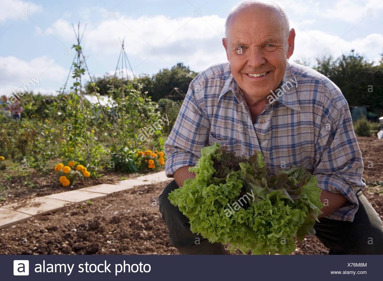 Senior man in checked shirt holding fresh leaf vegetable in garden crouching smiling portrait - Stock Image