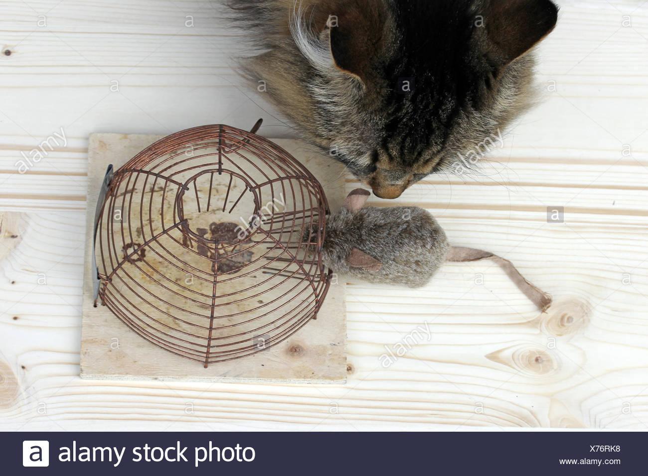 female animal Stock Photo