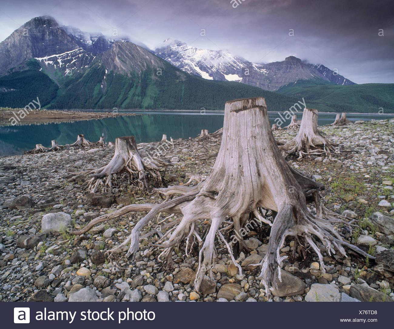 Upper Kananaskis Lake and tree stumps left over for clearing of dam, Peter Lougheed Provincial Park, Kanananskis Country, Albert - Stock Image