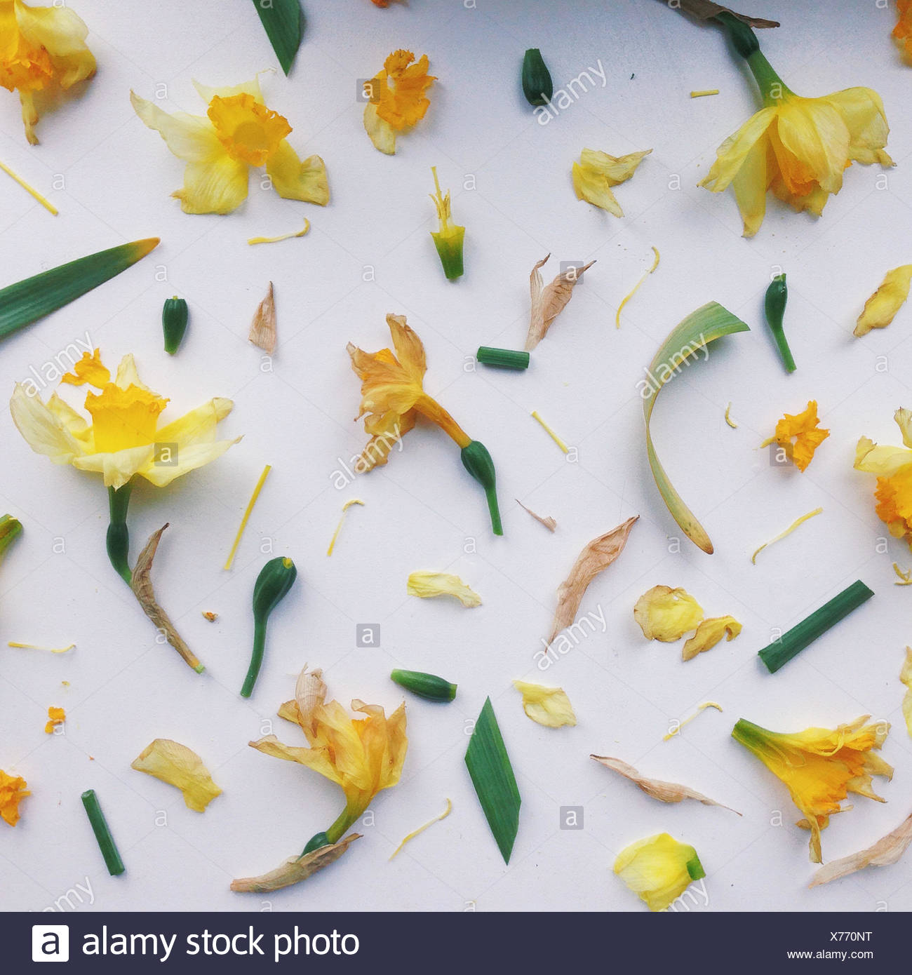 Pattern made of flower's parts - Stock Image