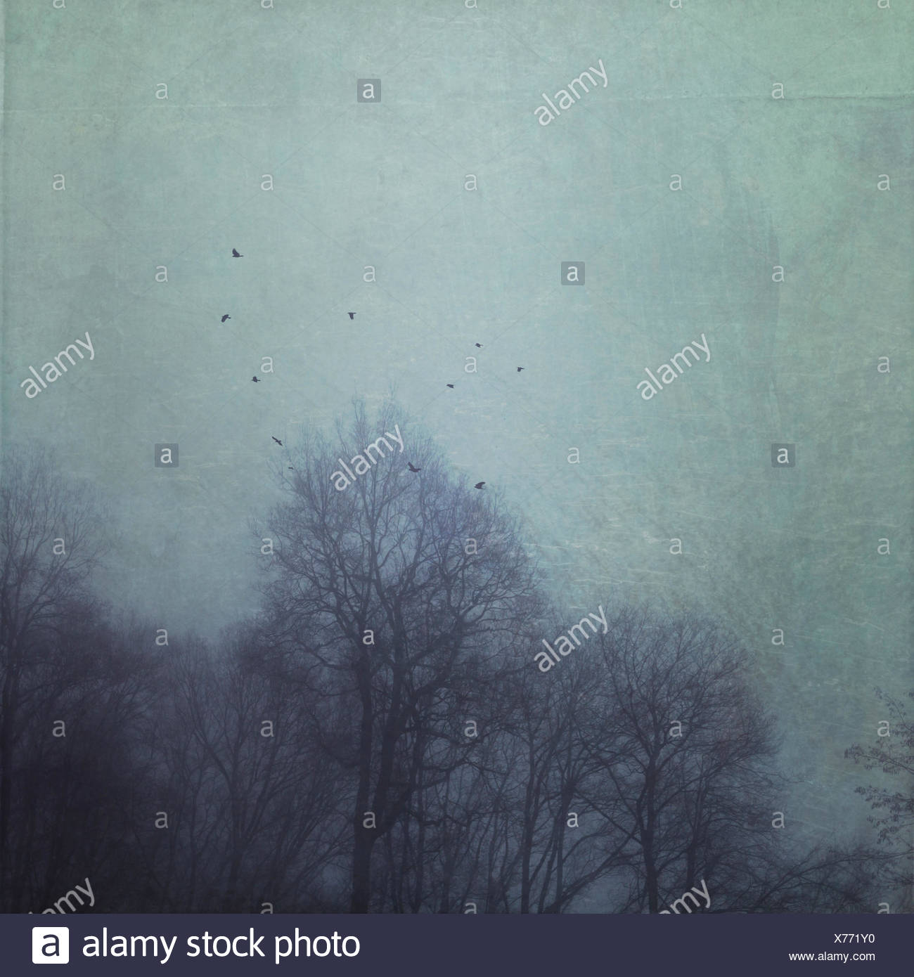 Silhouettes of trees during fog with flying birds, textured effect - Stock Image