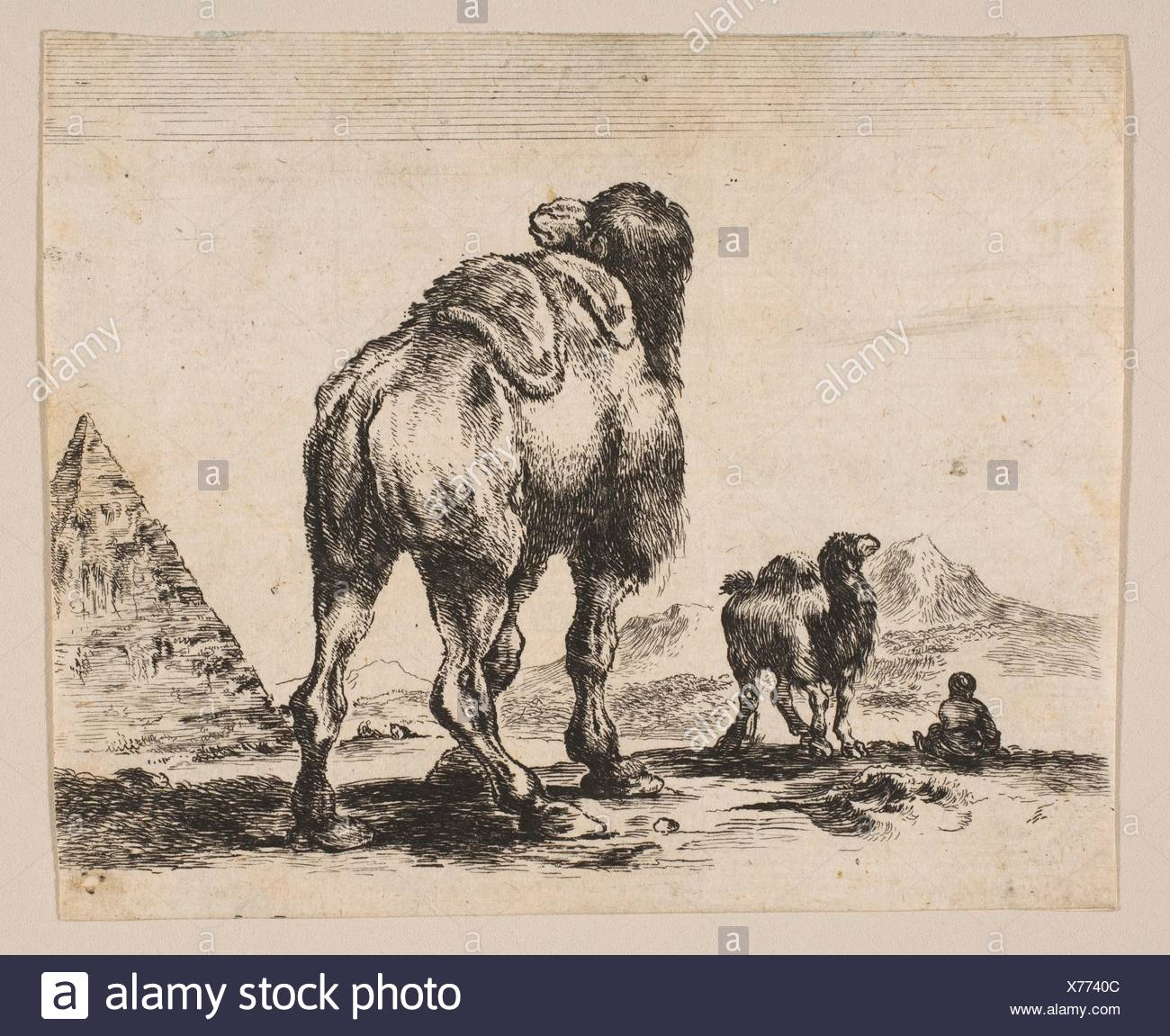 Plate 18: camel viewed from behind with pyramid at right, from 'Various animals' (Diversi animali). Series/Portfolio: 'Various animals' (Diversi - Stock Image