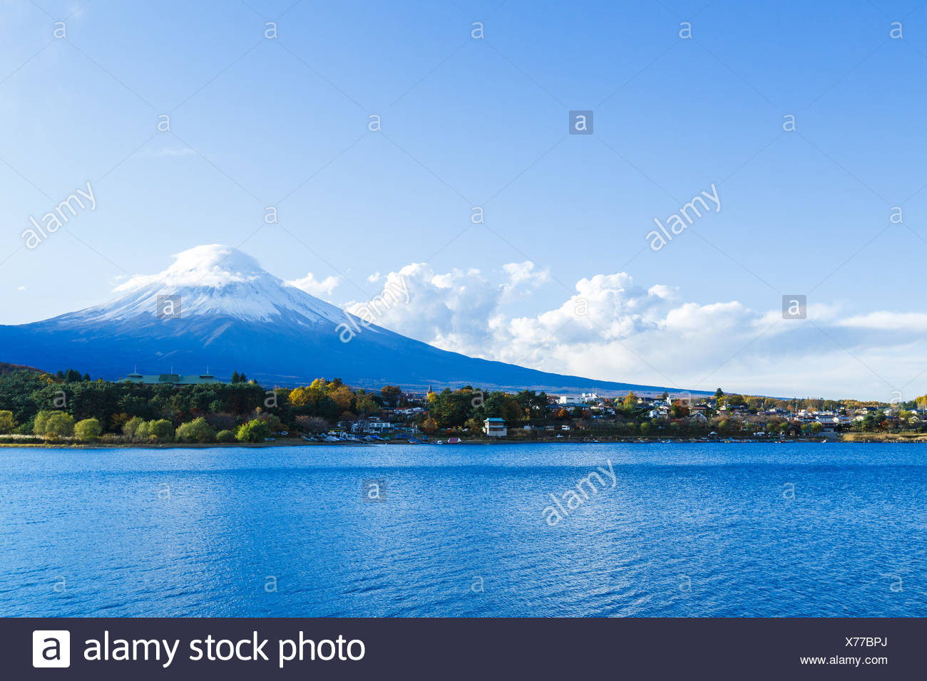 tree asia snow coke cocaine material drug anaesthetic addictive drug tip peak capped day during the day covered japanese japan - Stock Image