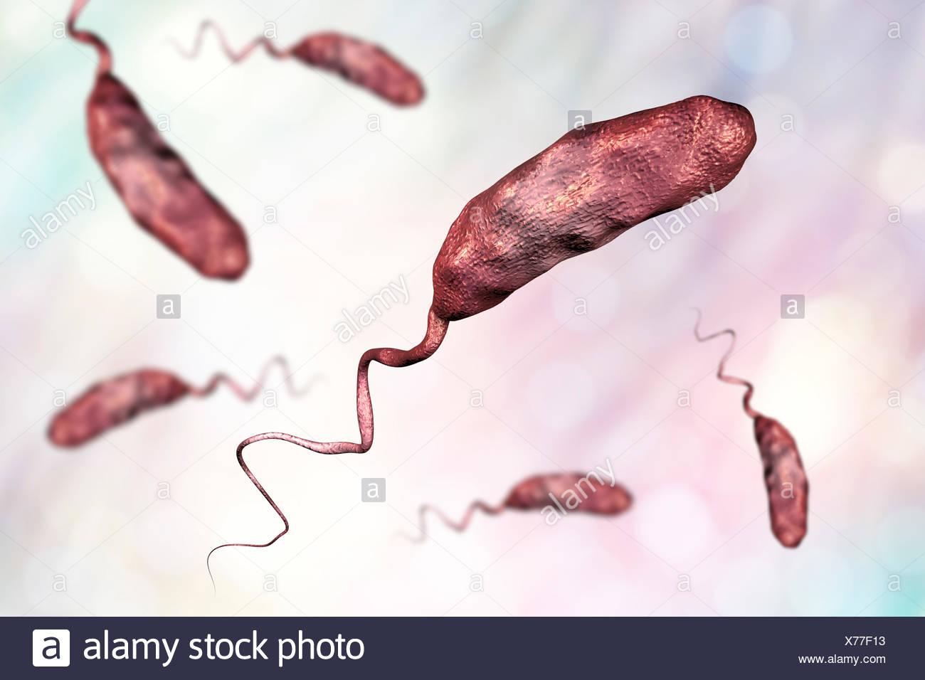 cholera bacterium vibrio cholerae stock photos & cholera ... vibrio diagram