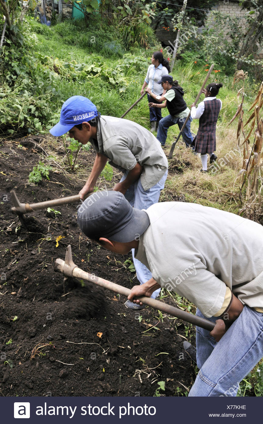 Teenagers from the slums of Cerro Norte being trained in horticulture as part of an urban agricultural project, slums of Cerro  - Stock Image
