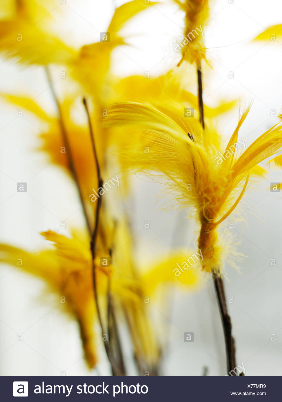 Twigs with coloured feathers Sweden. - Stock Image