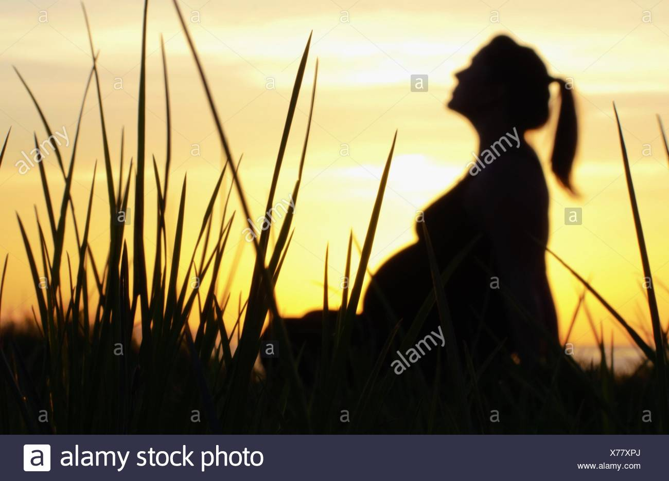tall grass silhouette. Sunset Silhouette Of Pregnant Woman Sitting Amongst Tall Grass - Stock Image