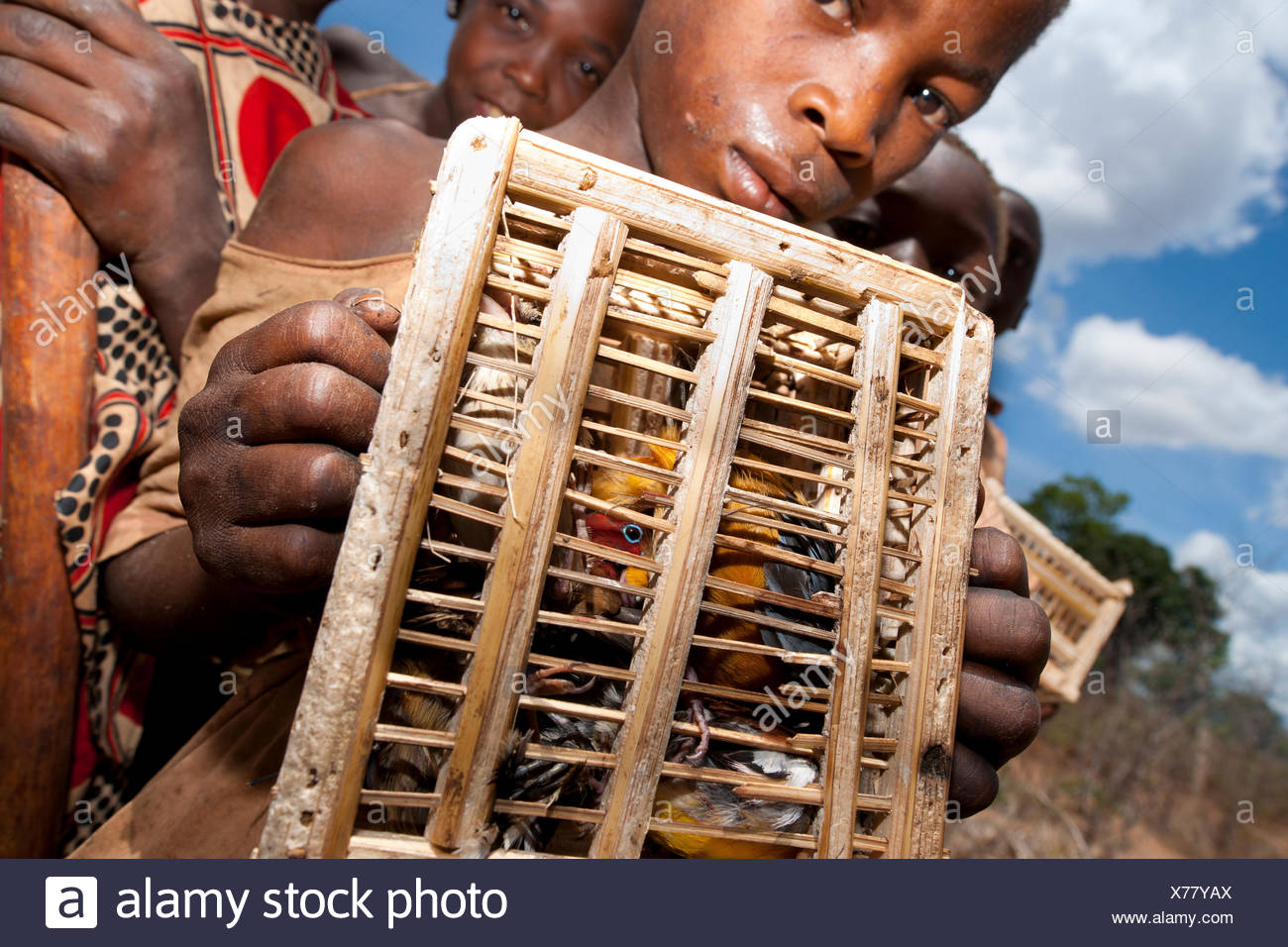 Mozambican children with captive passerines including Red-throated Twinspot (Hypargos niveoguttatus). Birds are caught to eat whilst watching fields against crop raiding baboons. Pemba to Montepuez highway, North-eastern Mozambique. - Stock Image