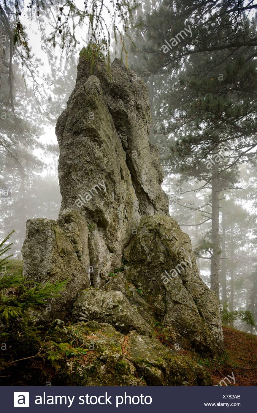 Druid stone in fog, Noestach, Triestingtal valley, Lower Austria, Austria, Europe - Stock Image