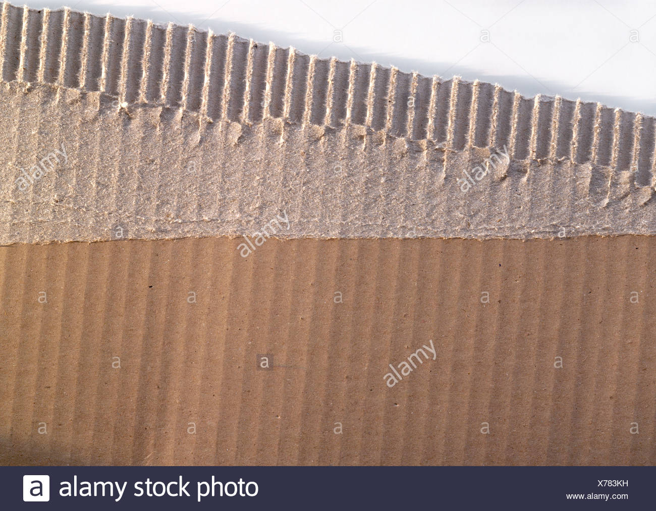 Piece of corrugated carboard, close-up - Stock Image
