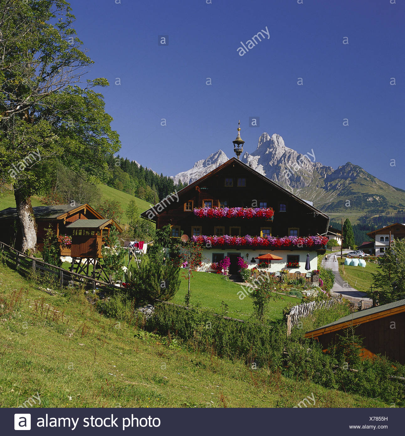 Austria Salzburg Country Felt Moss Farm Background Mountain Mitre Place House Farmhouse Residential Flowers Floral Decoration Summer